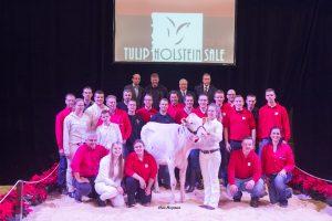 Tulip Holstein Sale 2016