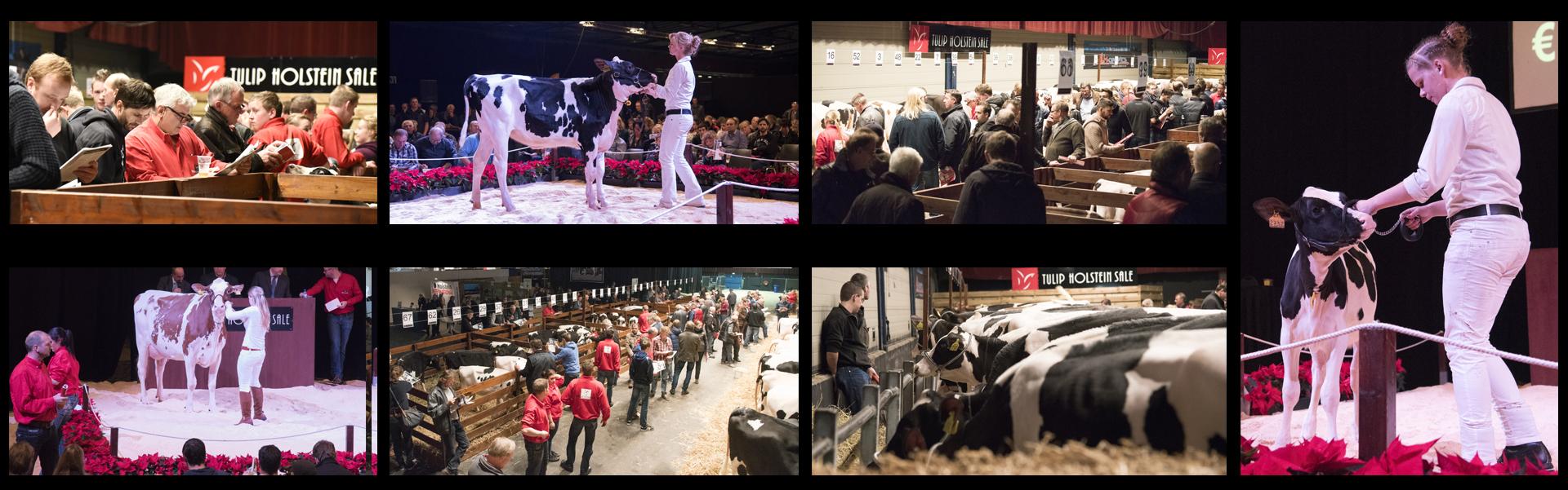 Tulip Sale 2015 dieren