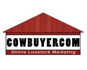 Tulip Sale live via Cowbuyer!